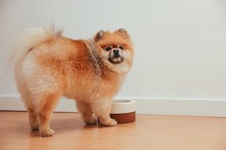 Quels aliments éviter dans l'alimentation de mon chien ?