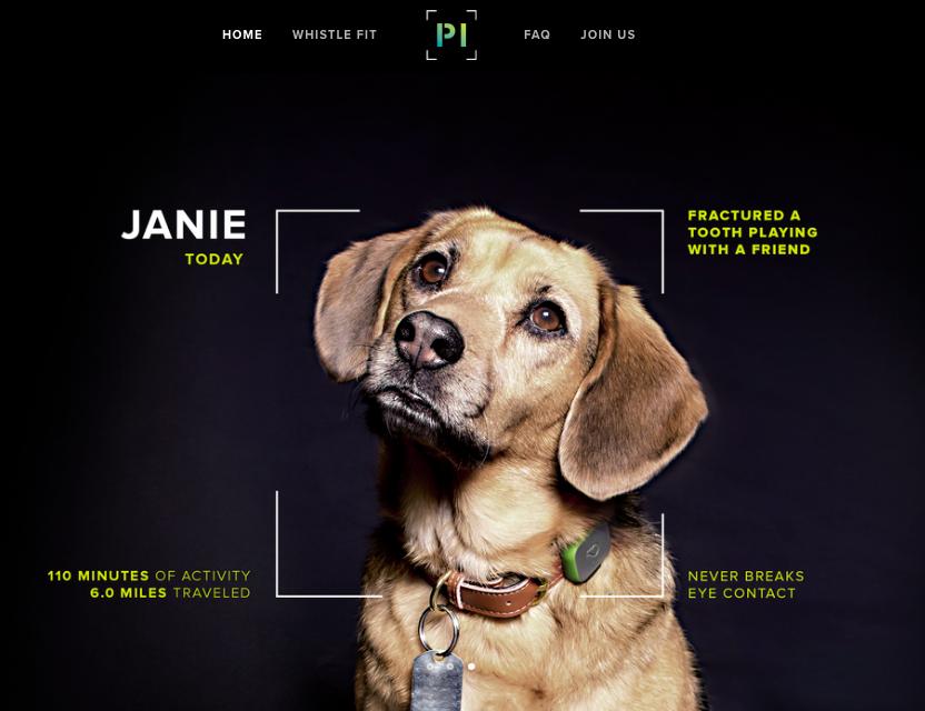 Le projet Pet Insight