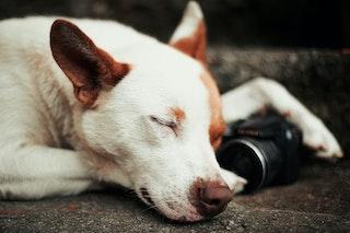Que doit-on savoir sur le sommeil de son chien